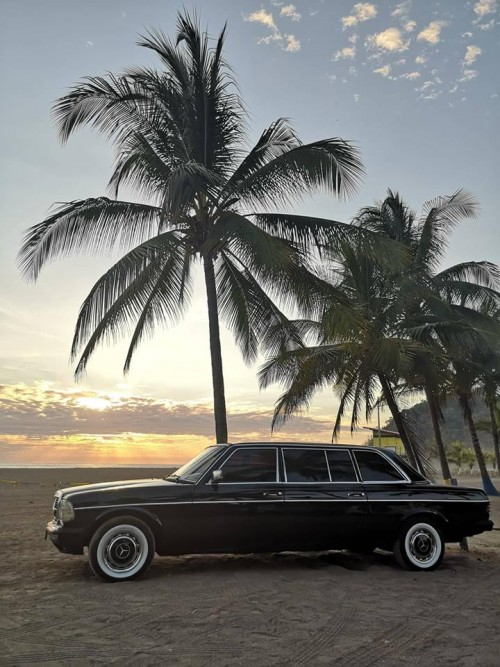PALM-TREE-LIMOUSINE-CENTRAL-AMERICA.jpg